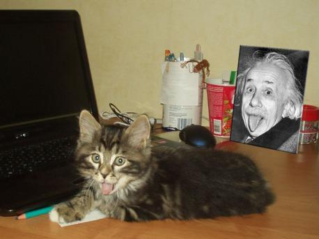 Einstein-Cat